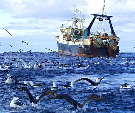 Reforma de la Ley de Pesca Marítima del Estado